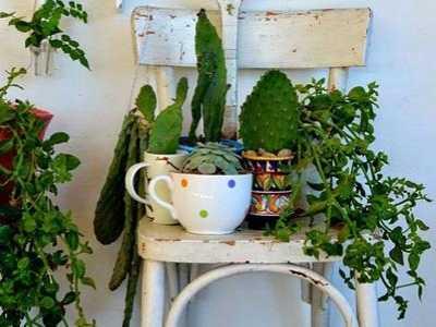 什么植物旺财 12生肖养啥植物旺财